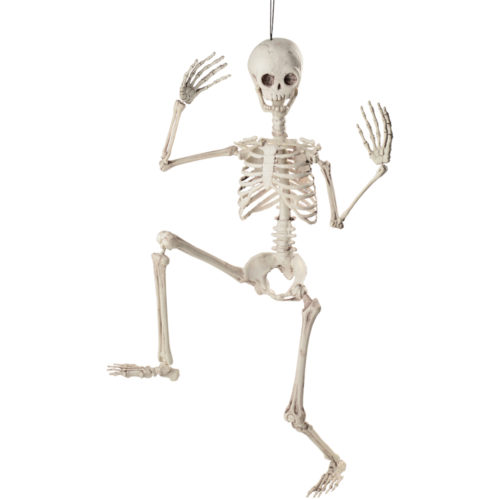 3 foot pose-able skeleton doll skeleton in the closet
