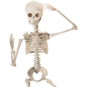 19 inch poseable Skeleton Doll